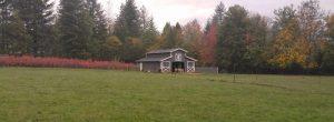 Background barn in field