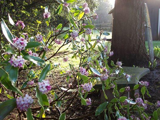 Our Spring Fling